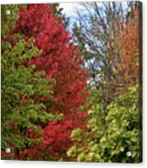 A Collection Of Fall Colours Acrylic Print
