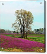 A Colorful Field Acrylic Print