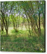 A Country Morning Acrylic Print