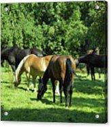 A Couple Of Horses Acrylic Print