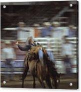 A Cowboy Rides A Bucking Bronco Acrylic Print