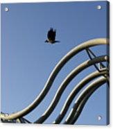 A Crow In Flight, Arhus, Denmark Acrylic Print