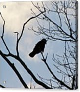 A Crow In My Eyes View Acrylic Print