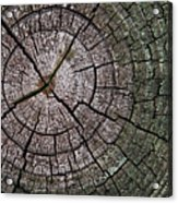 A Cut Above - Patterns Of A Tree Trunk Sliced Across Acrylic Print