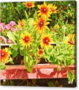 A Daisy Day Acrylic Print
