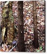 A Dapper Birth In The Midst Of Hemlocks Acrylic Print