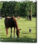 A Day At Chimney Field 1 Acrylic Print
