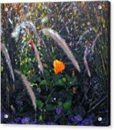 A Day In The Sun Acrylic Print