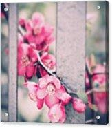 A Delicate Spring Acrylic Print