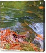 Flowing Water Fall Leaves Closeup Acrylic Print