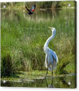 A Disagreement At The Pond Acrylic Print