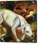 A Dog 1912 Acrylic Print