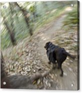 A Dog Backpacking On Pine Ridge Trail Acrylic Print