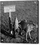 A Dog's Life Acrylic Print