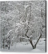 A Dogwood Sleeps While The Snow Falls Acrylic Print
