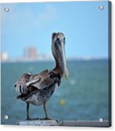 A Face Only A Mother Could Love Acrylic Print