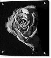A Fading Rose Acrylic Print