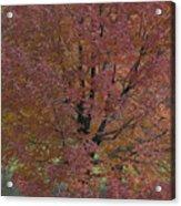 A Fall Day At Como Acrylic Print