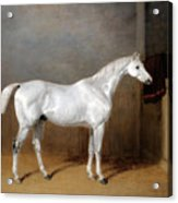 A Favourite Grey Horse Belonging To George Reed Standing In A Loose Box Acrylic Print