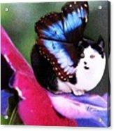 A Feline Fairy In My Garden Acrylic Print