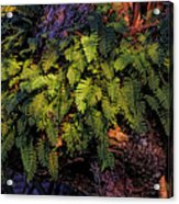 A Fern Botanical By H H Photography Of Florida Acrylic Print