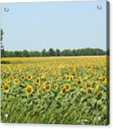 A Field Of Smiles Acrylic Print