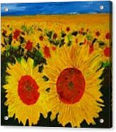 A Field Of Sunflowers Acrylic Print