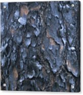 A Fire Scarred Tree Trunk Whose Thick Acrylic Print