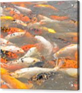 A Fish Of A Different Color Acrylic Print