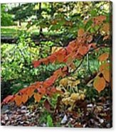 A Flame In The Forest Acrylic Print