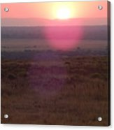 A Flare From South Africa Acrylic Print