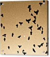 A Flight Of Grackles Circling The Moon Acrylic Print