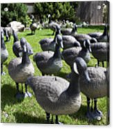 A Flock Of Decoys Acrylic Print