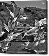 A Flock Of Seagulls Flying High To Summer Sky Acrylic Print