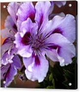 A Floral For Jalapeno Acrylic Print
