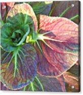 A Floral II Acrylic Print