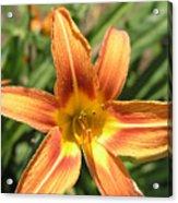 A Flower At The Farm Acrylic Print