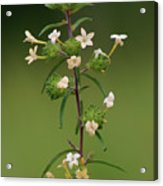 A Flower Tower Acrylic Print