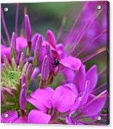 A Fly And A Flower Acrylic Print