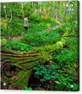 A Forest Stroll Acrylic Print