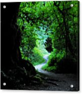 A Forest Trail Acrylic Print