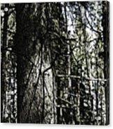A Forest Walk Acrylic Print