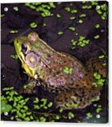 A Frog's Reflection Acrylic Print