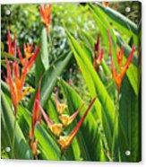 A Garden Paradise Acrylic Print