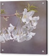 A Gentle Touch Of Spring Acrylic Print