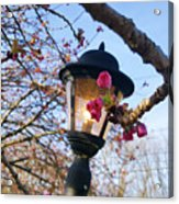 A Glance Of Spring Acrylic Print