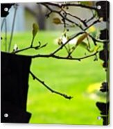 A Glimpse Of Spring Acrylic Print