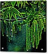 A Glow With Dew Acrylic Print