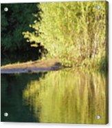 A Golden Reflection Acrylic Print