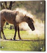 A Good Dust Bath  Acrylic Print